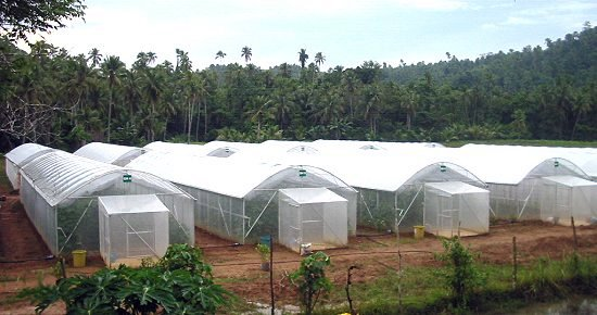 The Greenhouse Facility project in Brgy Limarayon, Calbayog City